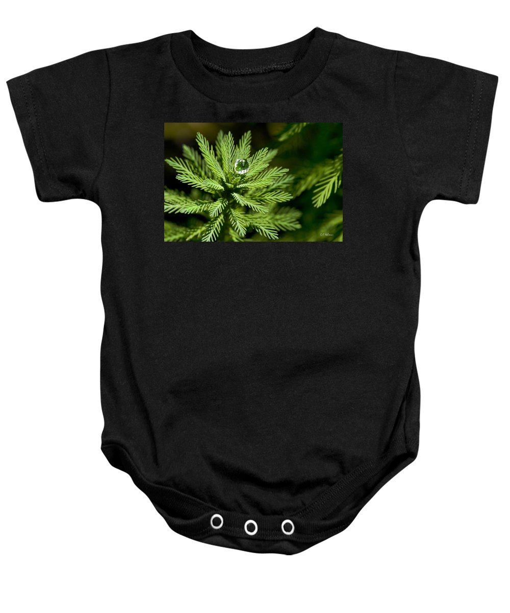 Dew Baby Onesie featuring the photograph Tree Top Dew Drop by Christopher Holmes