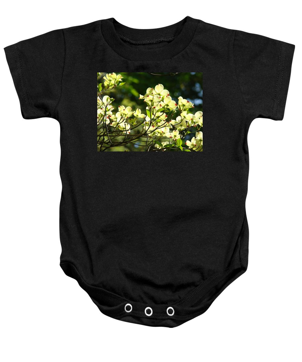 Dogwood Baby Onesie featuring the photograph Trees Landscape Art Sunlit White Dogwood Flowers Baslee Troutman by Baslee Troutman