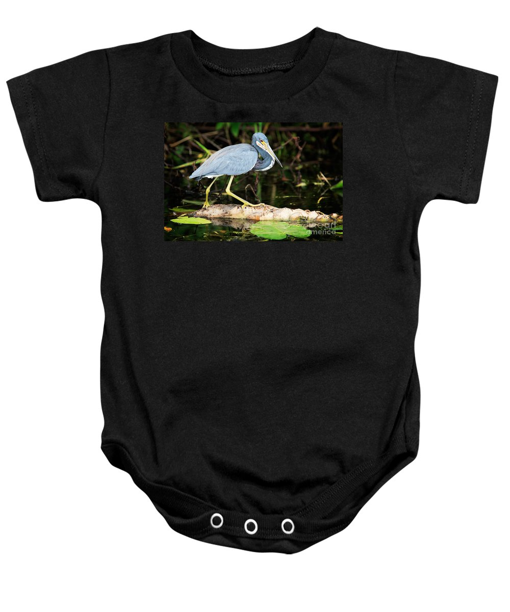Adult Tricolored Heron Baby Onesie featuring the photograph Tricolored Heron by Matt Suess