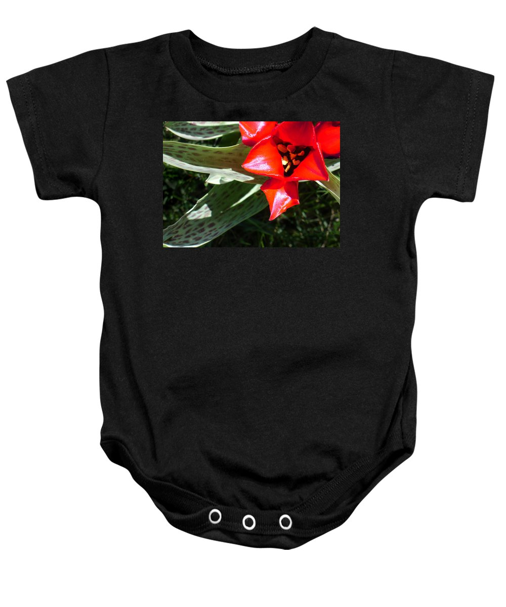 Tulip Baby Onesie featuring the photograph Tulip by Steve Karol