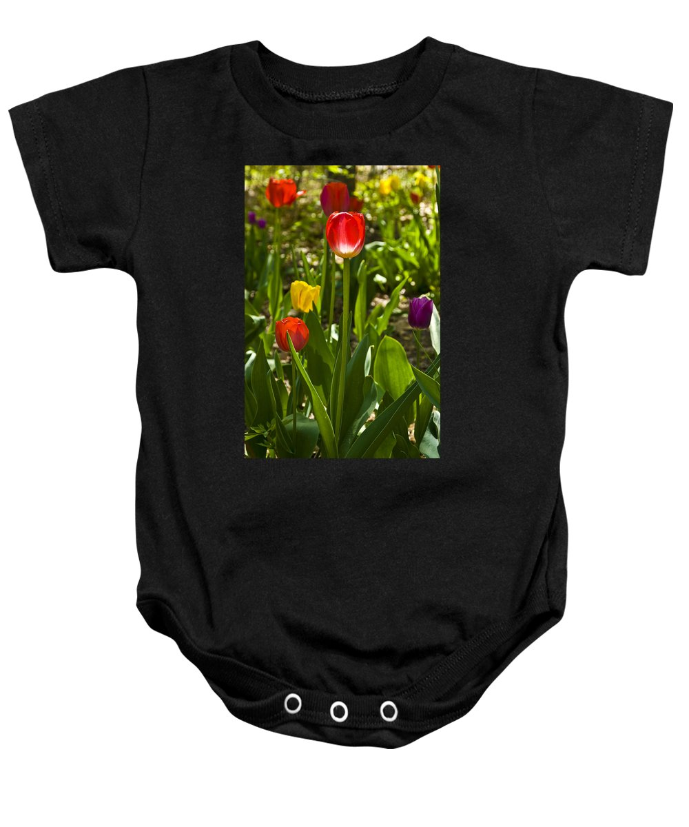Spring Baby Onesie featuring the photograph Tulips In The Garden by Anthony Sacco