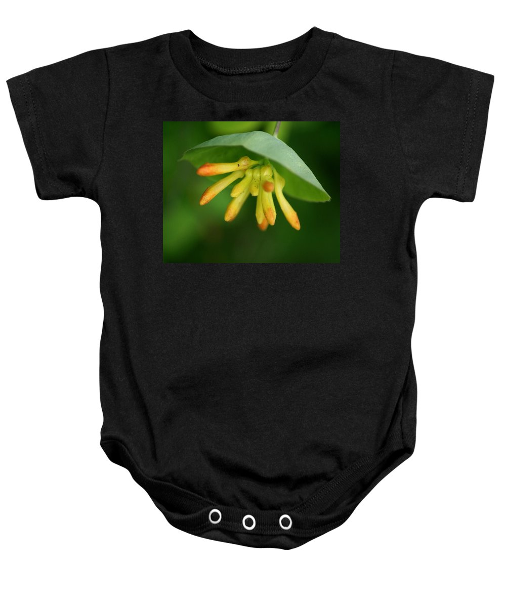 Nature Baby Onesie featuring the photograph Umbrella Plant by Ben Upham III