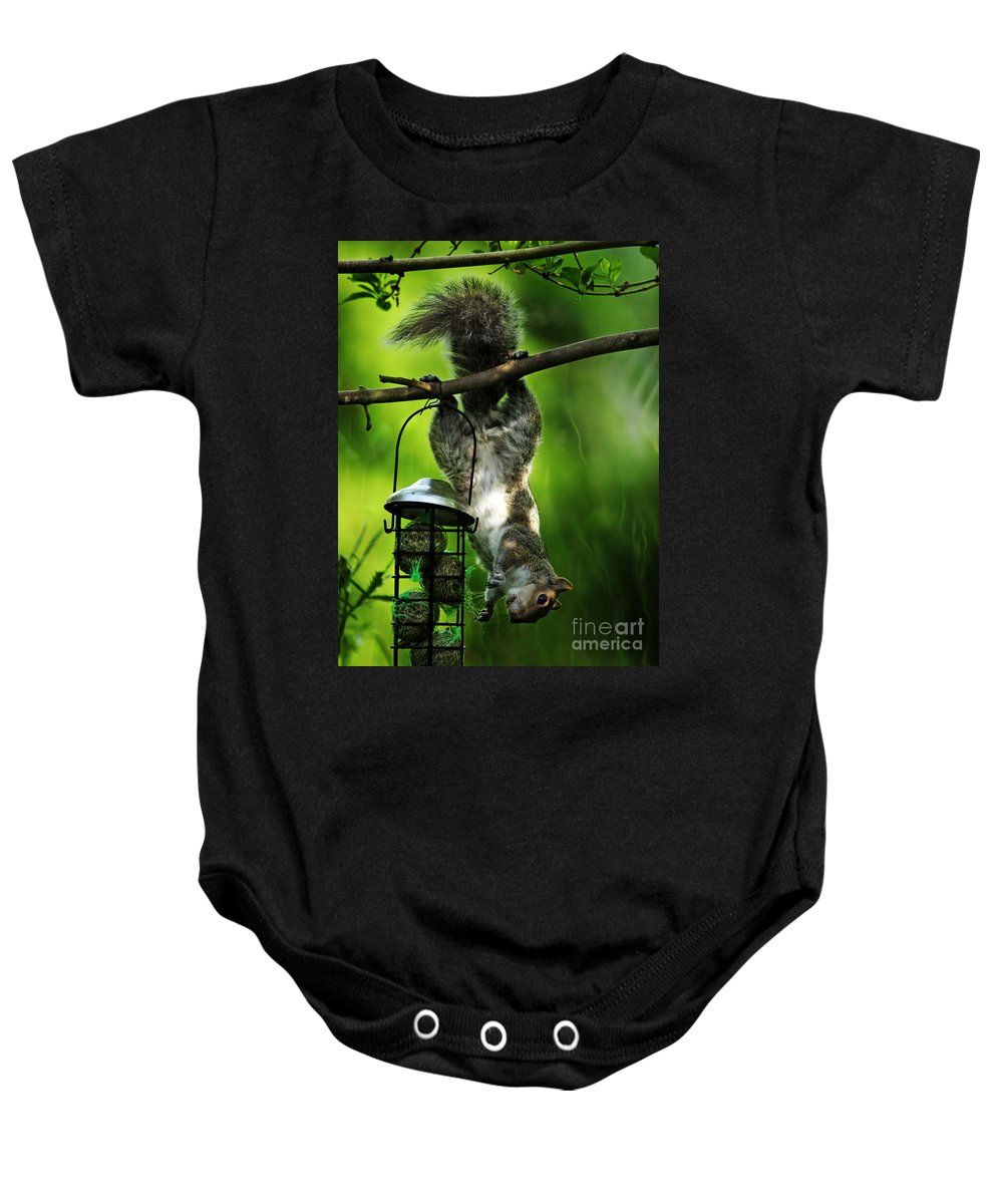 Squirrel Baby Onesie featuring the photograph Upside Down by Angel Tarantella