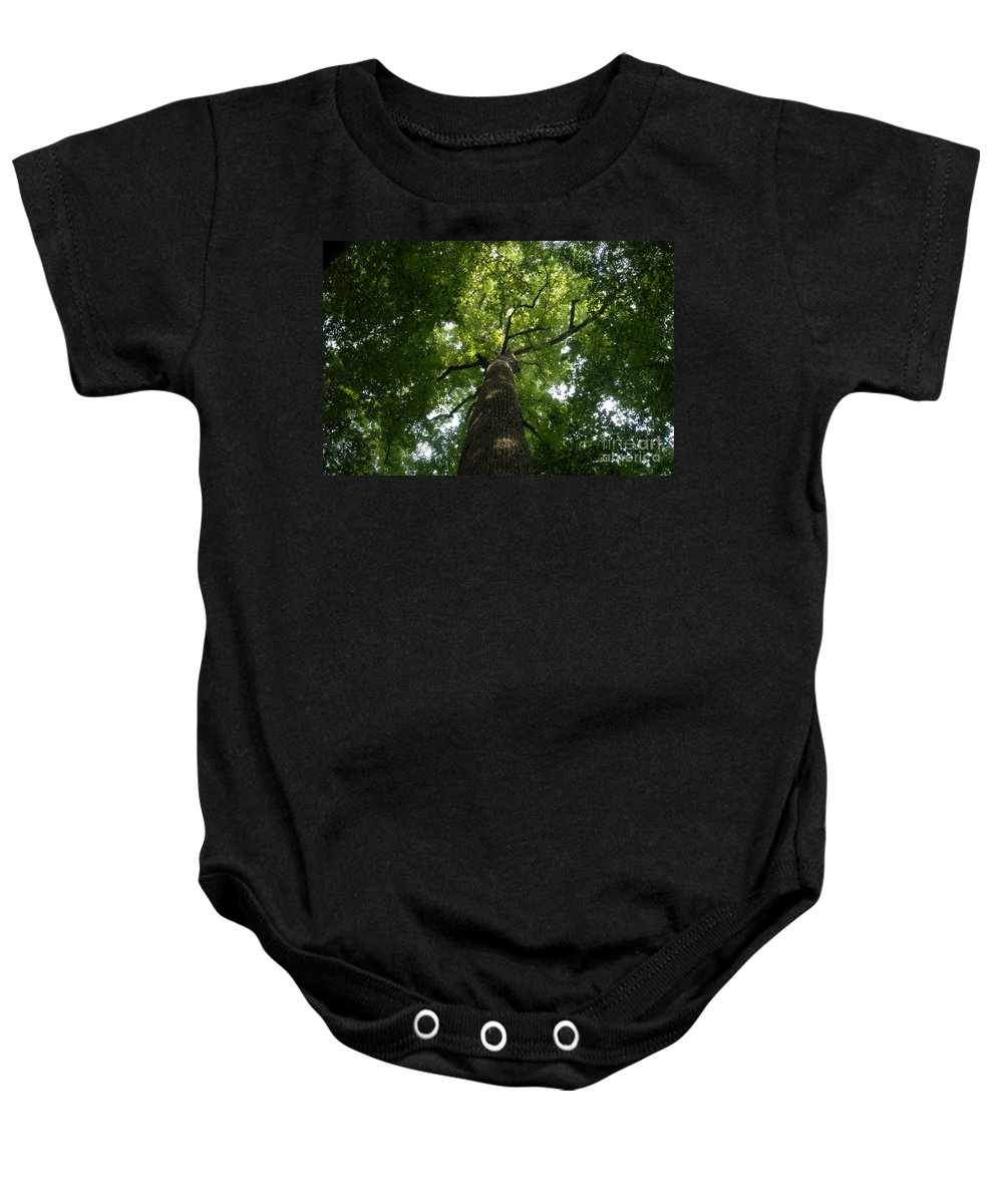 Joyce Kilmer Memorial Forest Baby Onesie featuring the photograph Virgin Canopy by David Lee Thompson