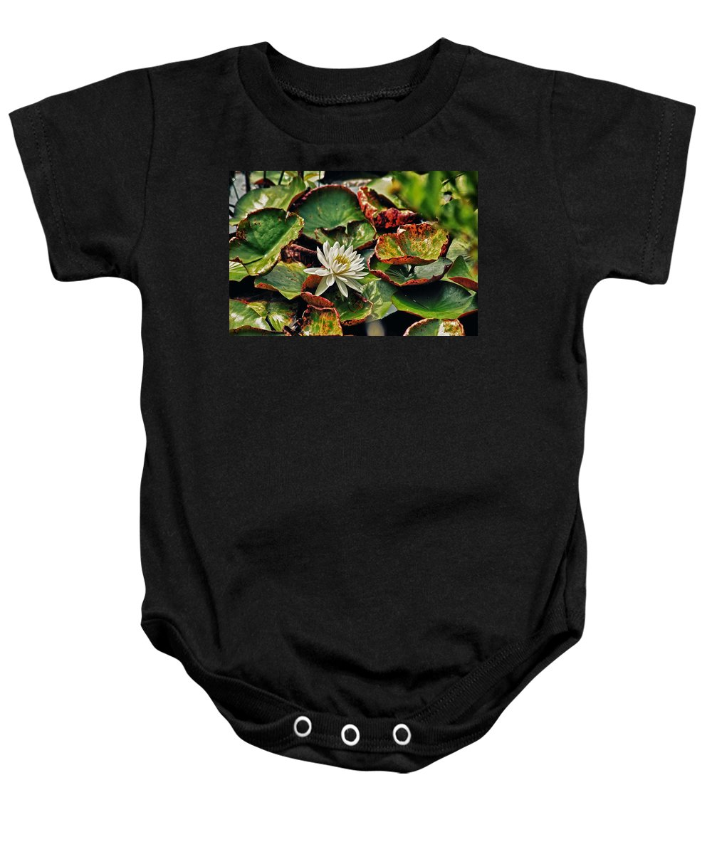 Alabama Photographer Baby Onesie featuring the digital art Water Lilly With Brown Pads by Michael Thomas