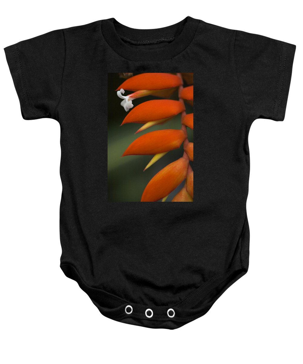 Heliconia Baby Onesie featuring the photograph White Flower And Orange by Karen Ulvestad