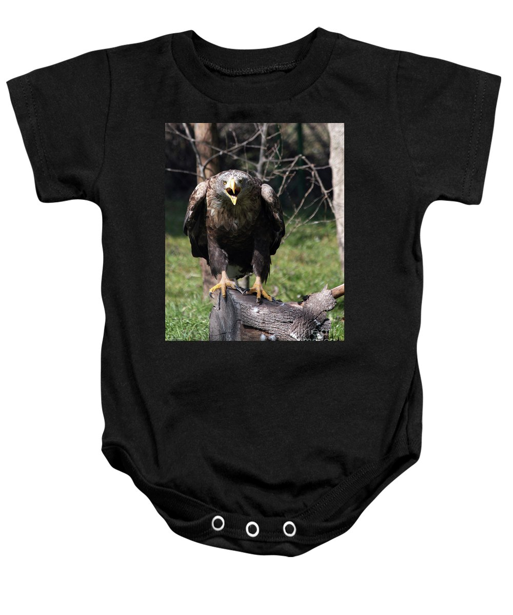 Eagle Baby Onesie featuring the photograph White Tailed Eagle Screaming Nature Wildlife Scene by Goce Risteski