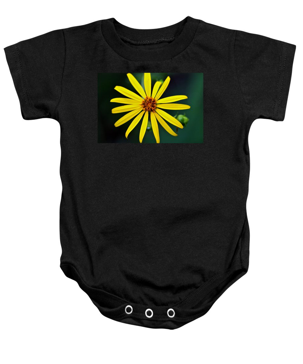 Rosinweed Baby Onesie featuring the photograph Whorled Rosinweed by Jack R Perry