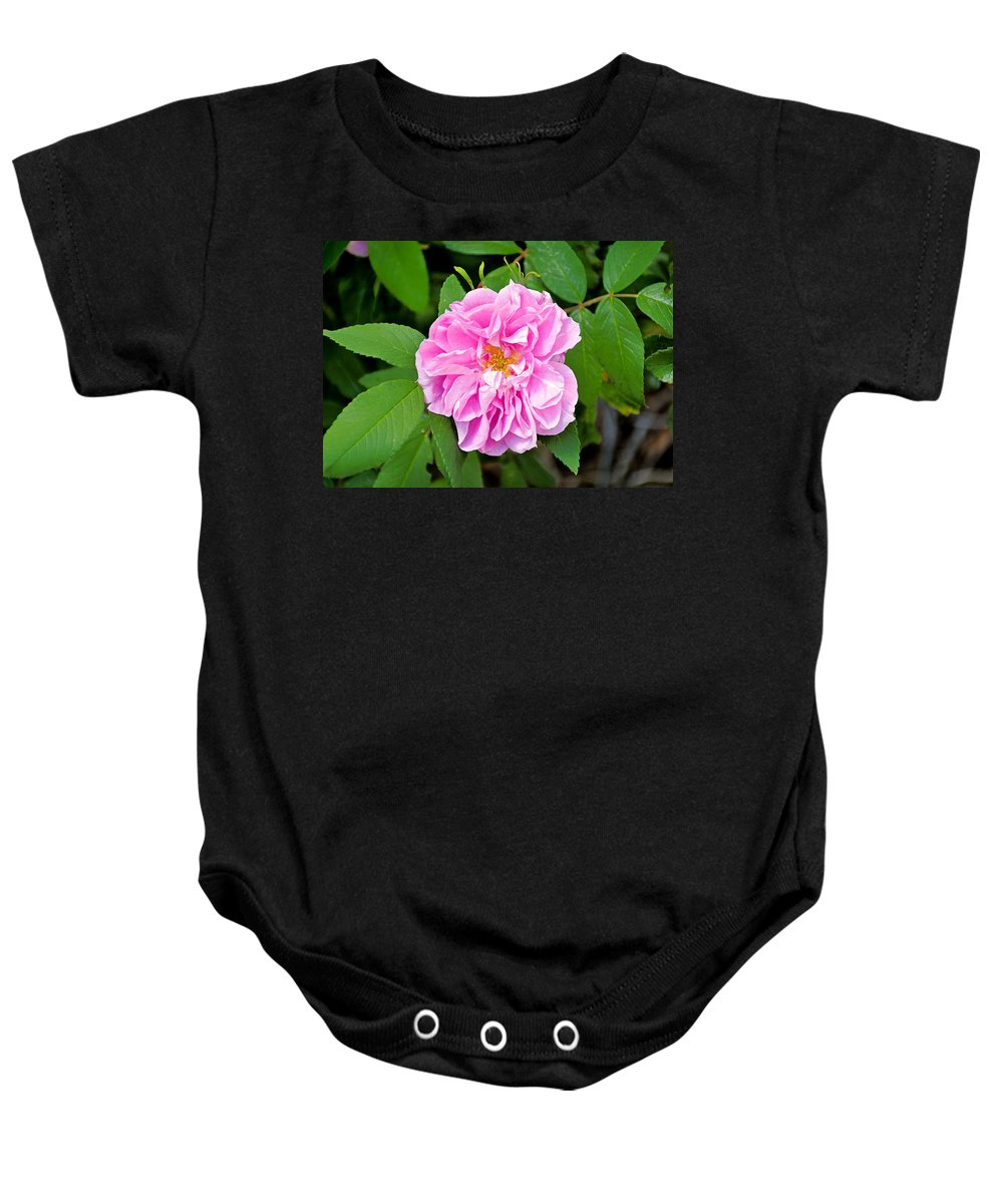 Winter Park Baby Onesie featuring the photograph Winter Park Rose by Robert Meyers-Lussier