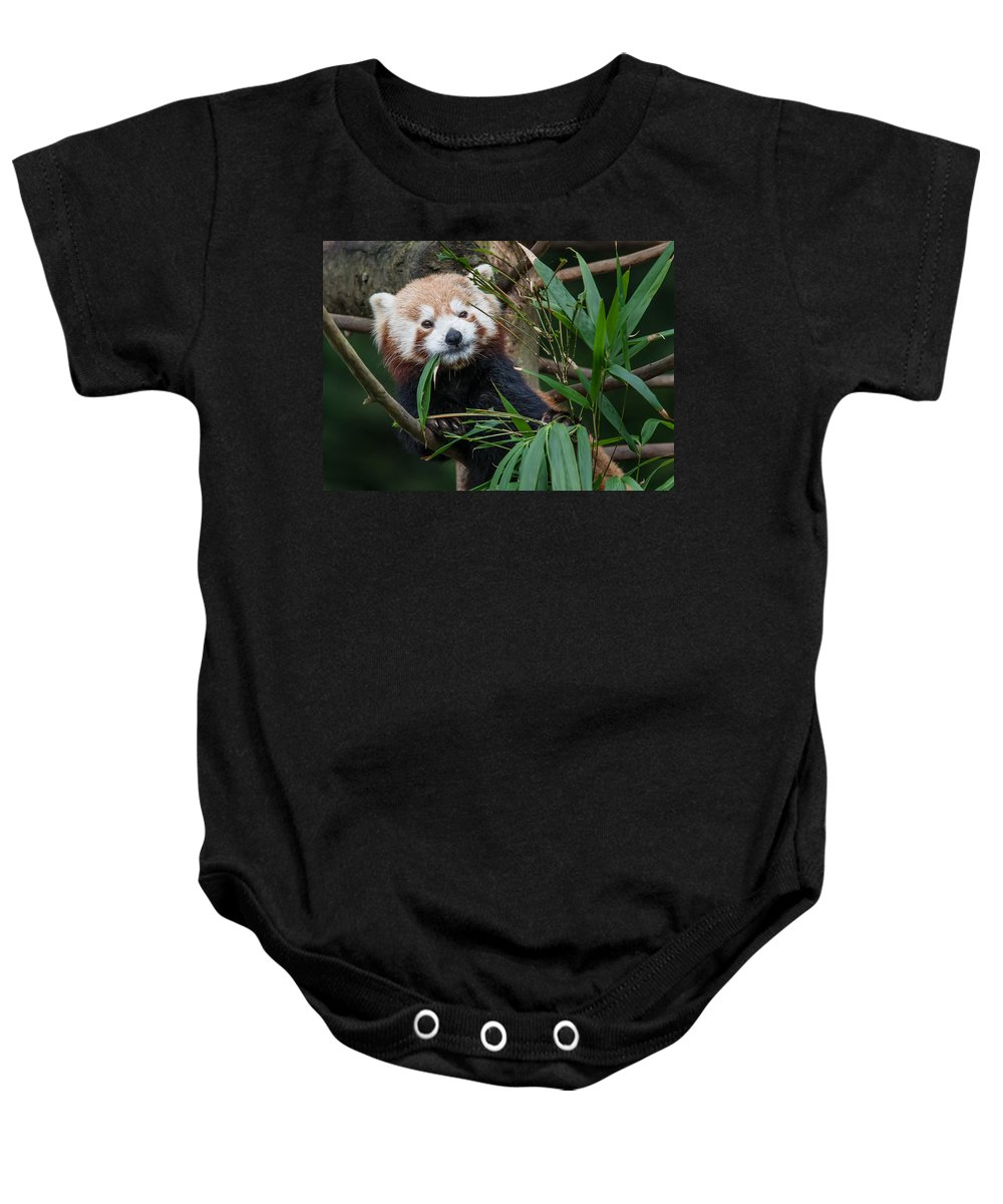 Image of: Racoon Sequoia Park Zoo Baby Onesie Featuring The Photograph Wizened Red Panda By Greg Nyquist Kigu Wizened Red Panda Onesie For Sale By Greg Nyquist