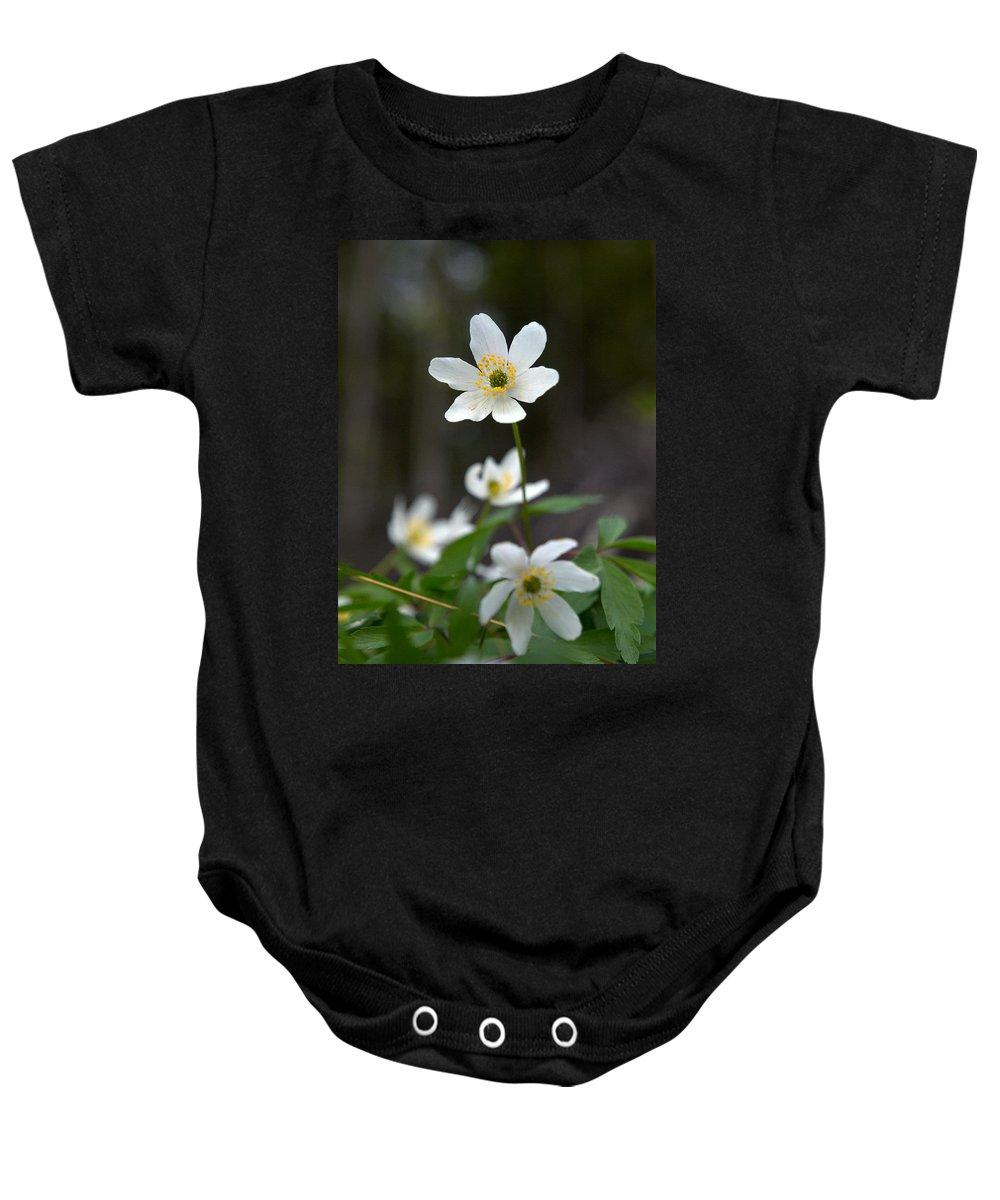 Lehtokukka Baby Onesie featuring the photograph Wood Anemone by Jouko Lehto