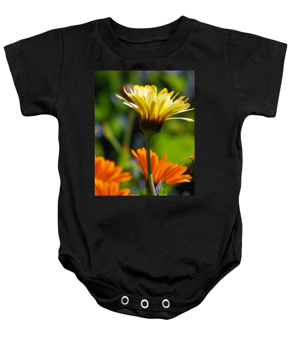 Daisy Baby Onesie featuring the photograph Yellow Daisy by Amy Fose
