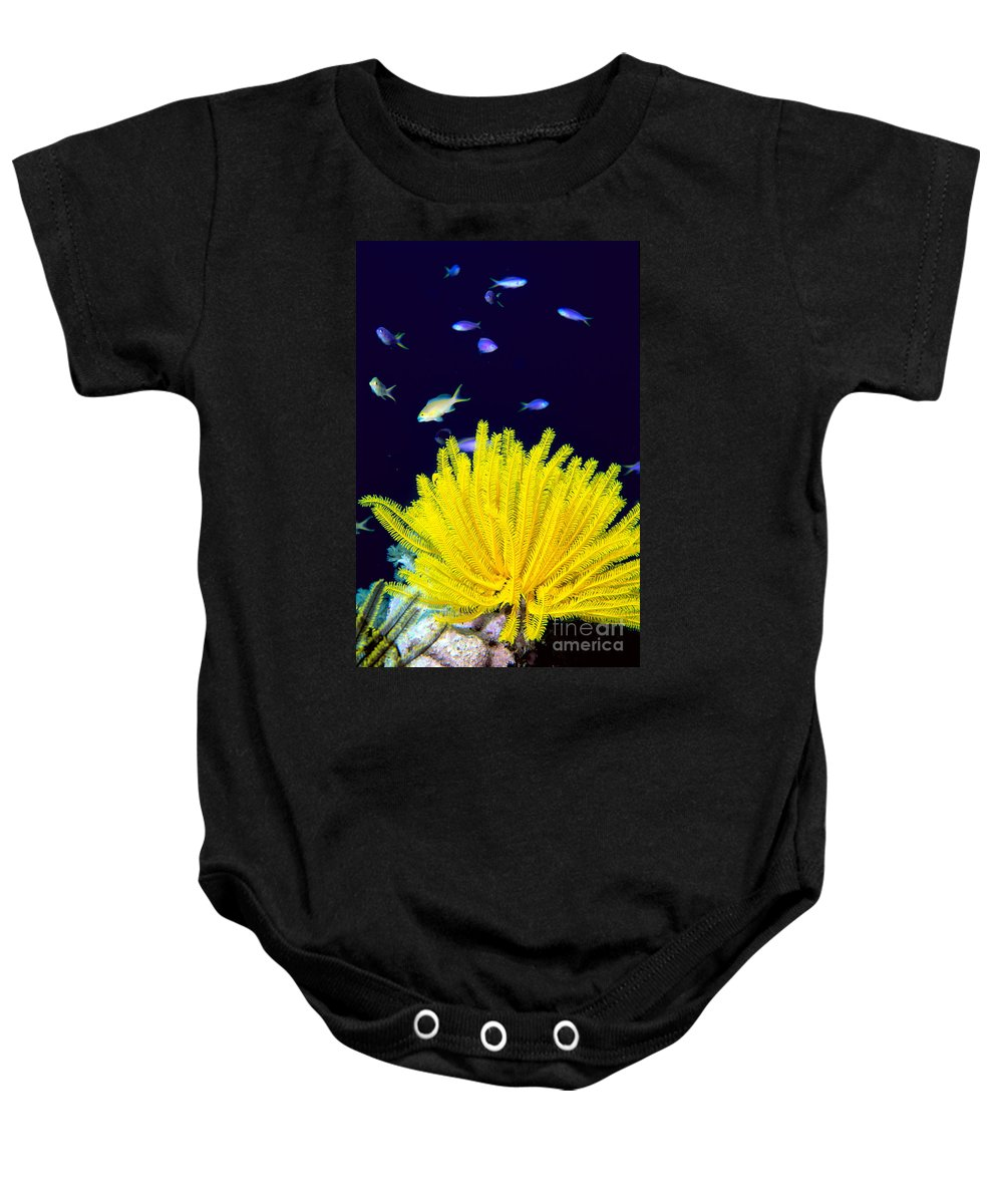 C1943 Baby Onesie featuring the photograph Yellow Feather Star by Ed Robinson - Printscapes