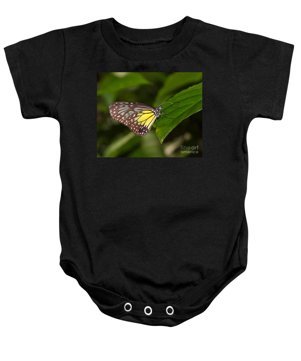 Butterfly Baby Onesie featuring the photograph Yellow Glassy Tiger Butterfly by Louise Heusinkveld