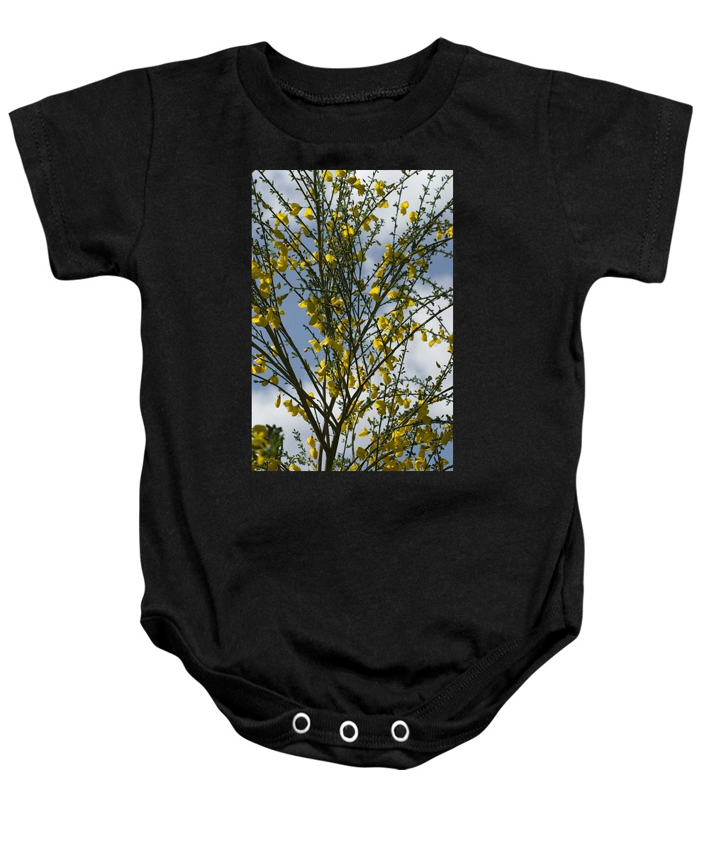 Flowers Baby Onesie featuring the photograph Yellow Little Flowers by Sara Stevenson