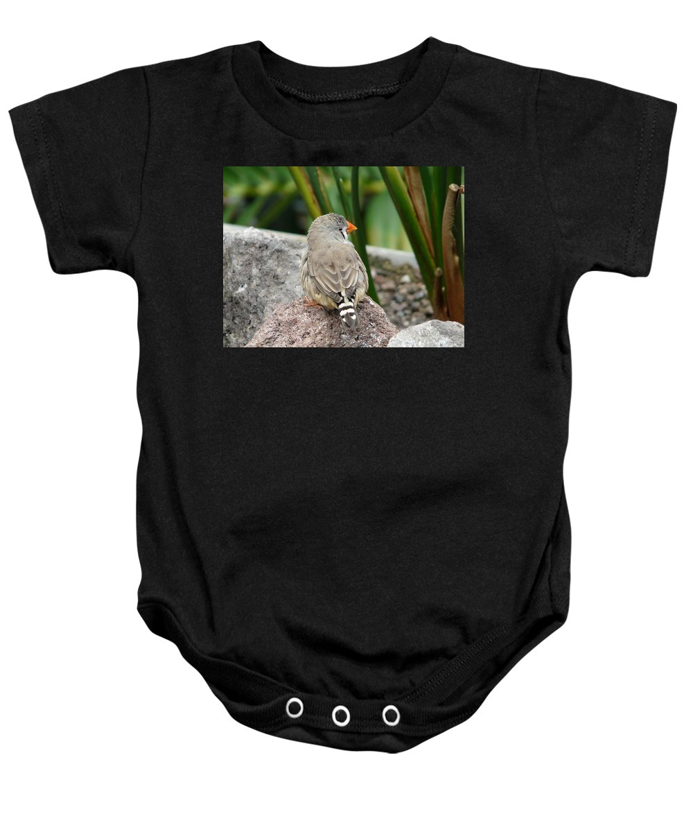 Bird Baby Onesie featuring the photograph Zebra Finch by Valerie Ornstein