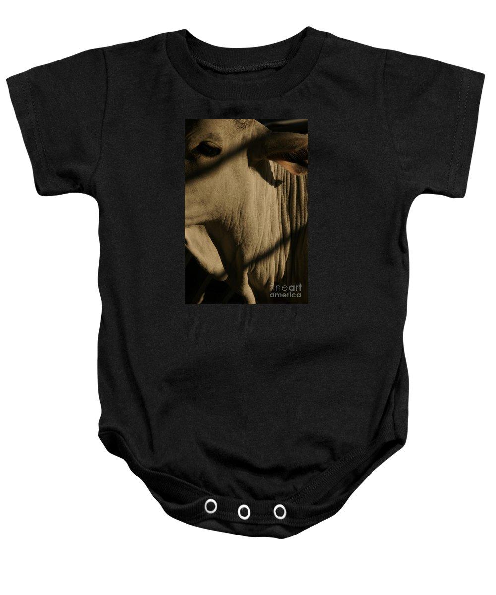 Brahma Bull Baby Onesie featuring the photograph Zebu by Linda Shafer