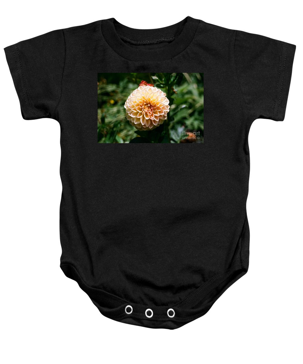 Zinnia Baby Onesie featuring the photograph Zinnia by Dean Triolo