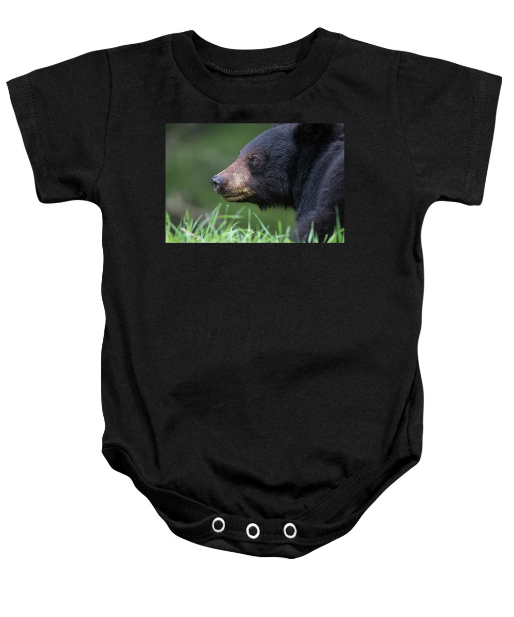 Black Bear Baby Onesie featuring the photograph Black Bear Amongst The Grass by Dan Carr