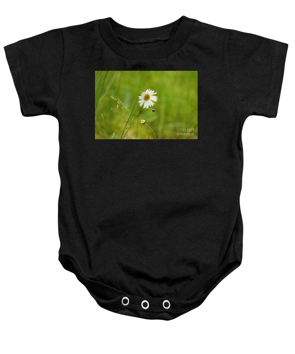 Chamomile Baby Onesie featuring the photograph Chamomile Or Daisy? by Leone Lund