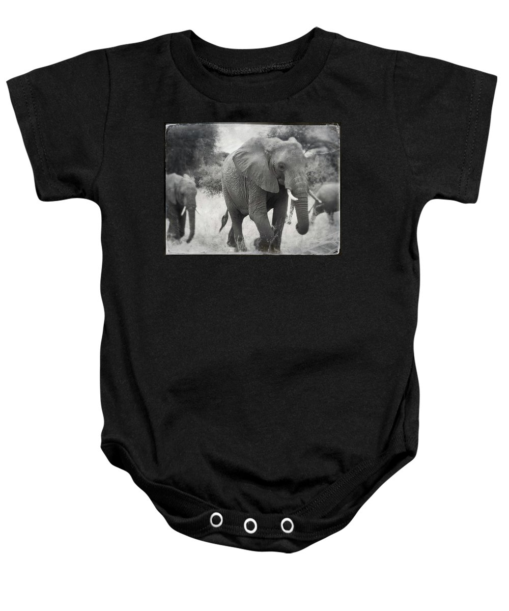 Wildlife Baby Onesie featuring the photograph Elephant And Babies by Judith Kitzes
