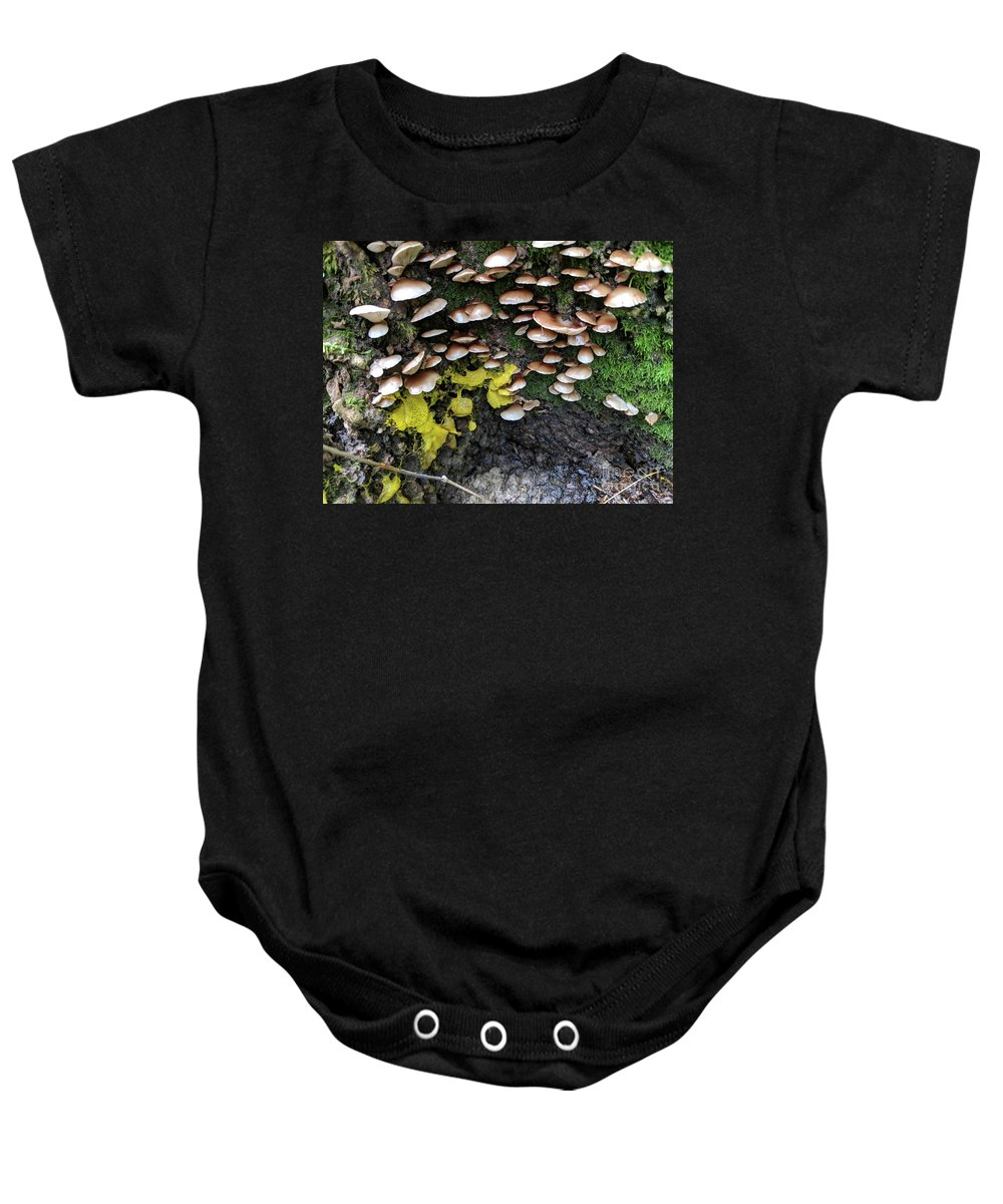 Mushrooms Baby Onesie featuring the photograph The Slow Battle by Hunted Gatherings