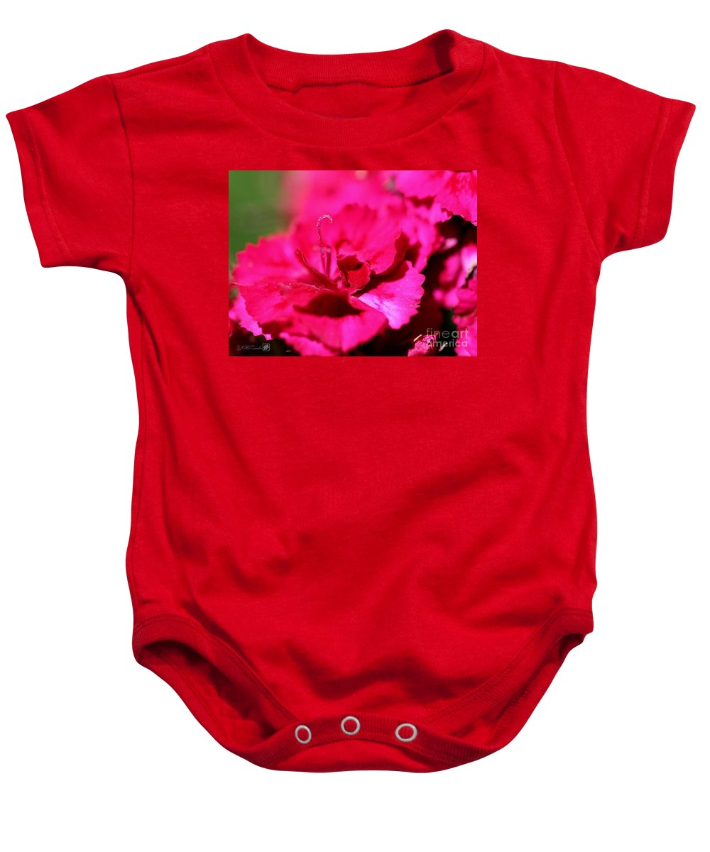 Mccombie Baby Onesie featuring the photograph Sweet William From The Super Duplex Bluepoint Mix by J McCombie