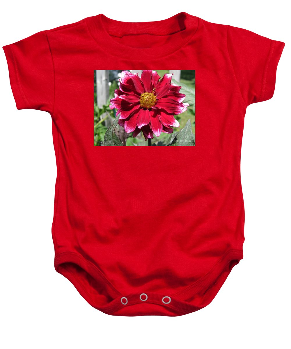Mccombie Baby Onesie featuring the photograph Dahlia Named Darkarin by J McCombie