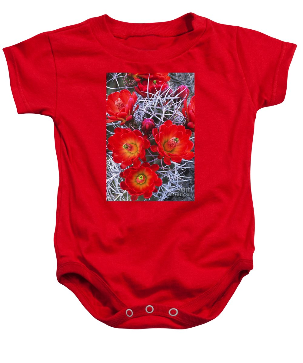 Claretcup Cactus Baby Onesie featuring the photograph Claretcup Cactus In Bloom Wildflowers by Dave Welling