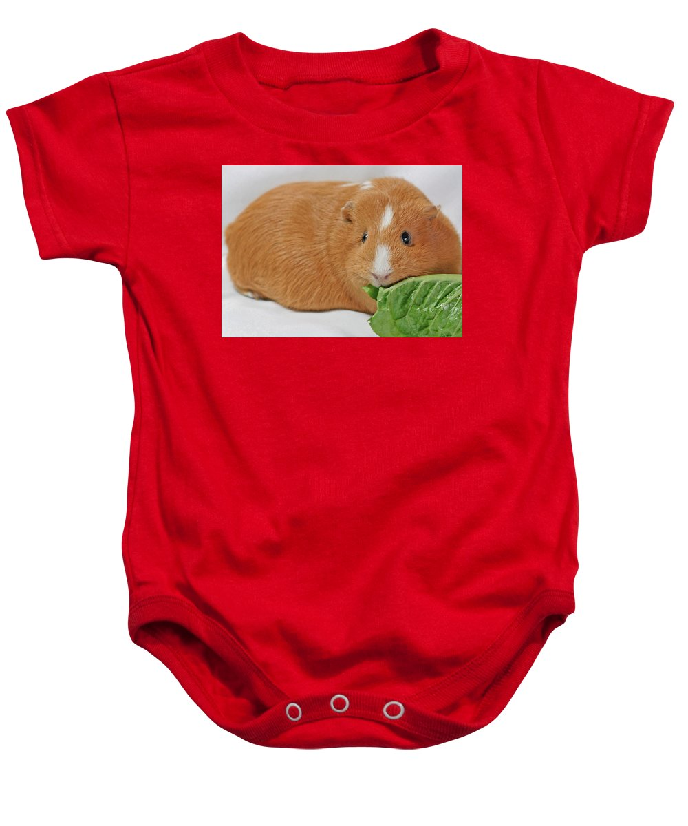 Animals Baby Onesie featuring the photograph Daphne by Lisa Phillips