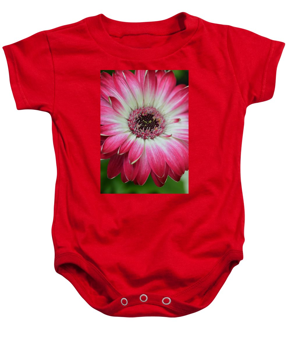 Gerber Baby Onesie featuring the photograph Dsc413-001 by Kimberlie Gerner