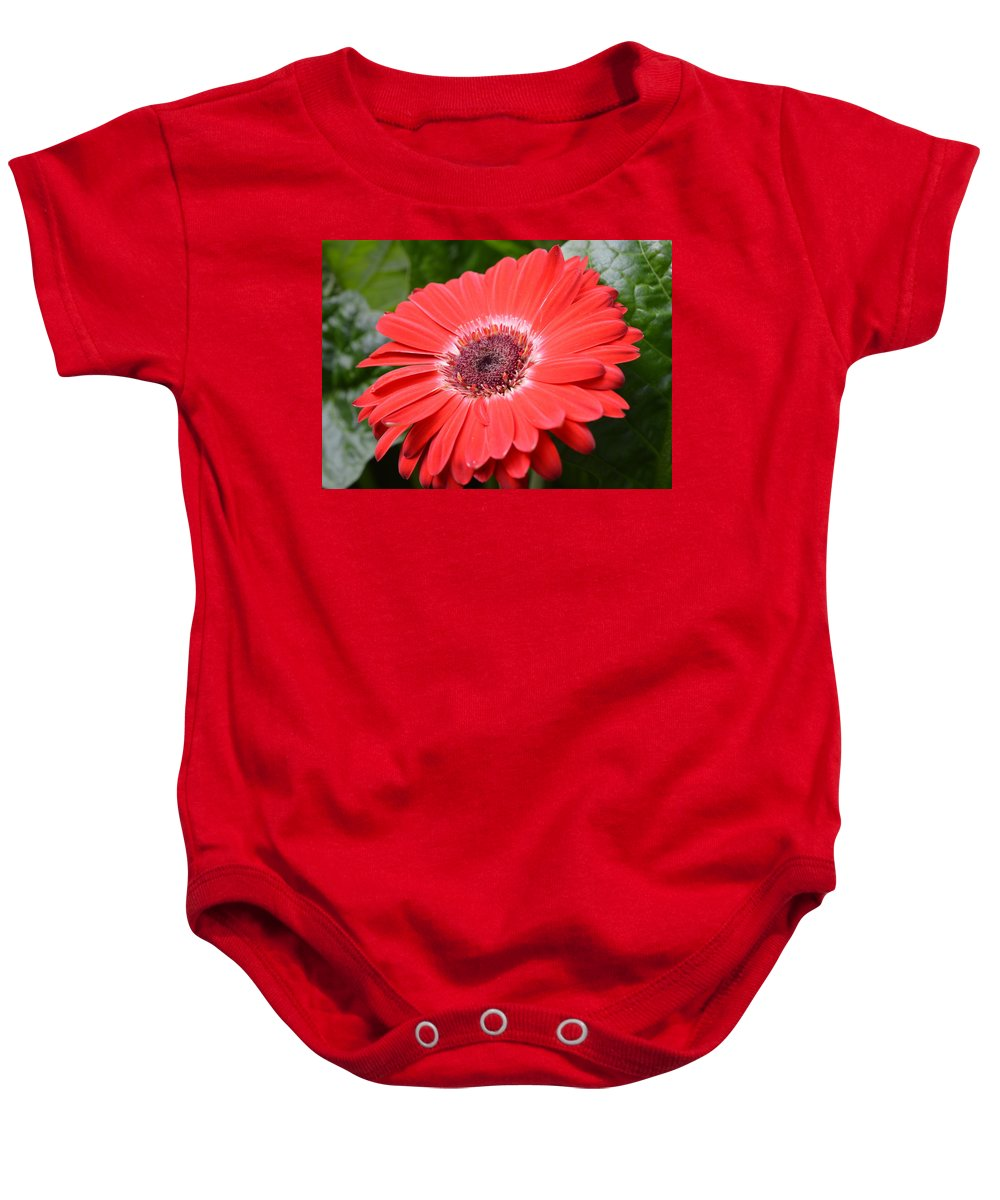 Gerber Baby Onesie featuring the photograph Dsc520-001 by Kimberlie Gerner