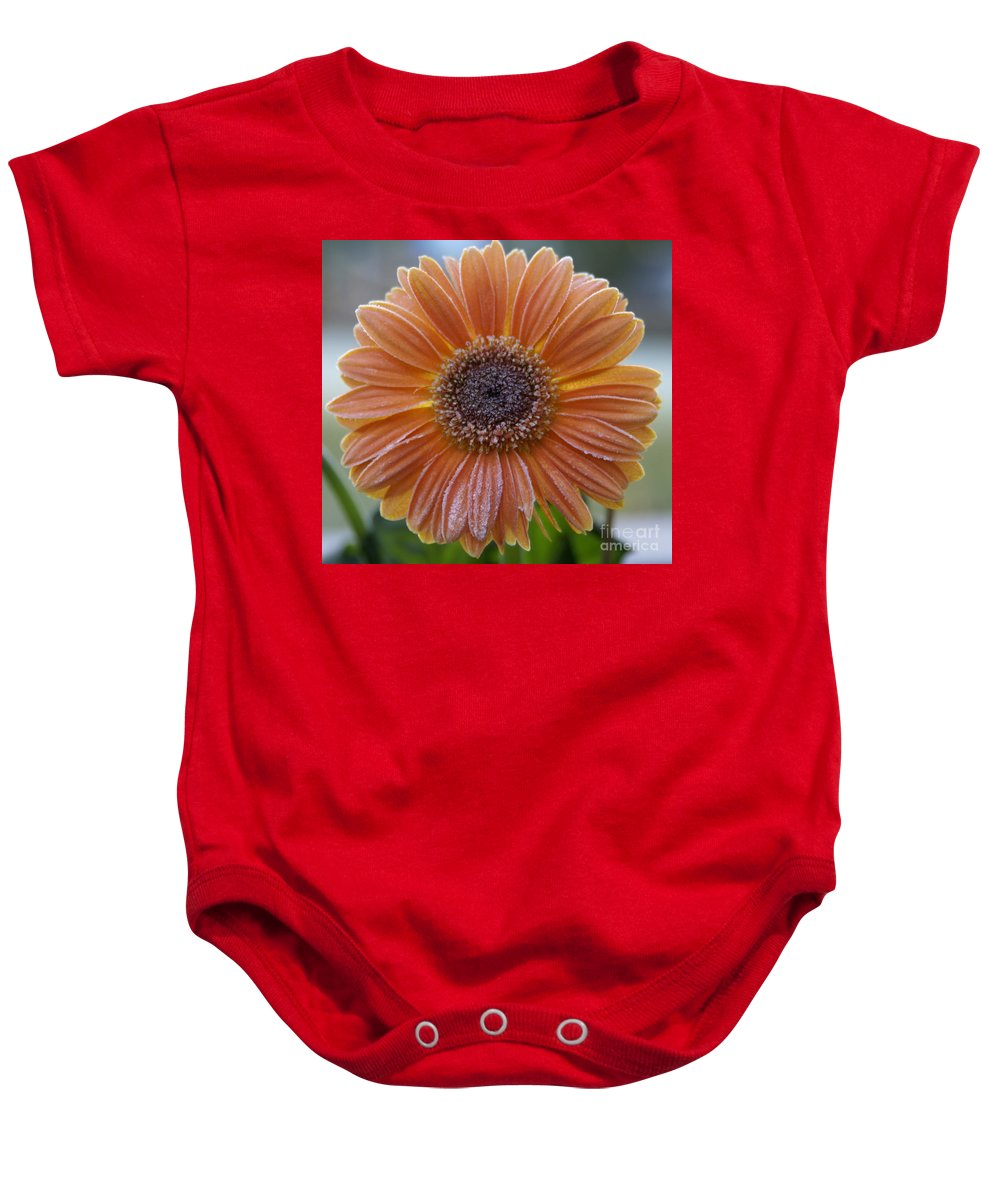 Frost Baby Onesie featuring the photograph Gerbera Daisy Covered In Frost by SAJE Photography