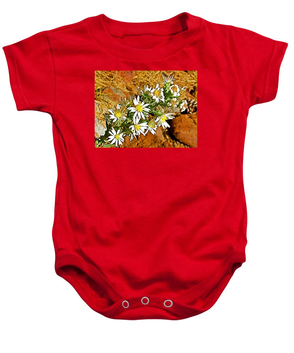 Leafy-bract Asters In Wildcat Canyon Trail Along Kolob Terrace Road In Zion National Park Baby Onesie featuring the photograph Leafy-bract Asters In Wildcat Canyon Trail Along Kolob Terrace Road In Zion National Park-utah by Ruth Hager