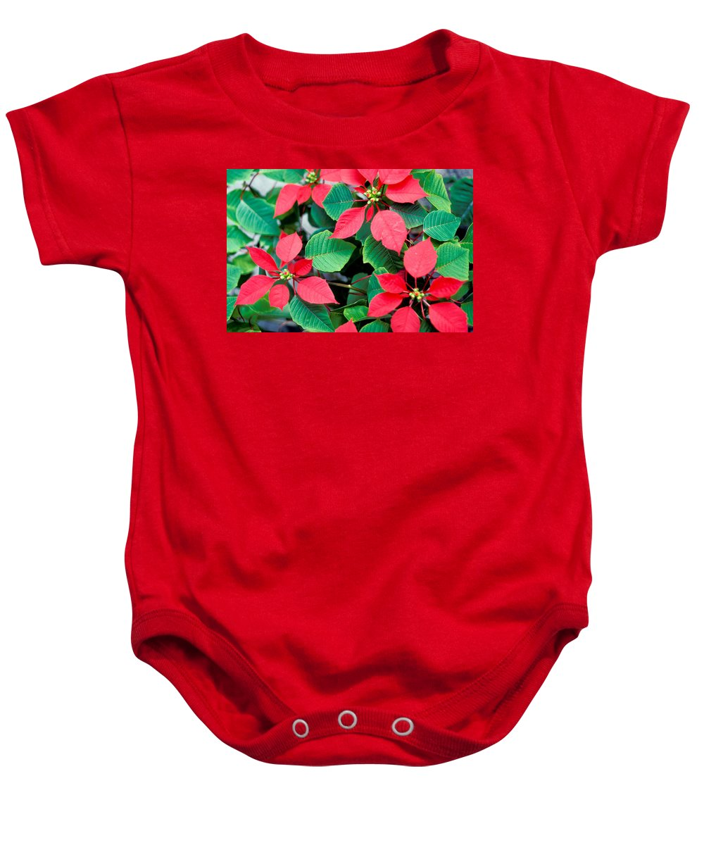 No People; Horizontal; Outdoors; Day; Close-up; Part Of; Full Frame; Nature; Beauty In Nature; Fragility; Poinsettia; Red; Green; Leaf; Petal; Flower Head; Blossom Baby Onesie featuring the photograph Poinsettia Flowers by Anonymous