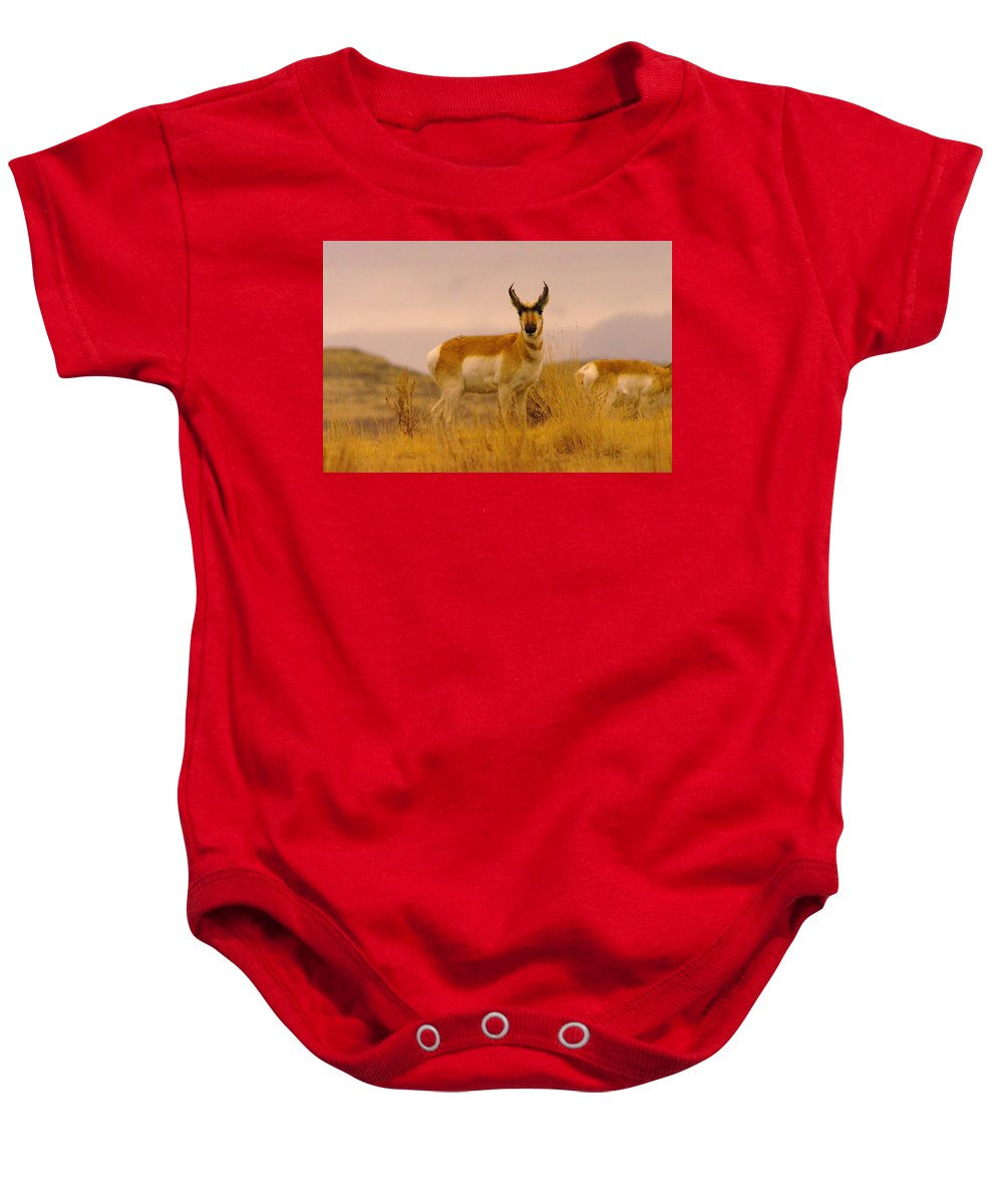Pronghorn Baby Onesie featuring the photograph Pronghorn by Jeff Swan