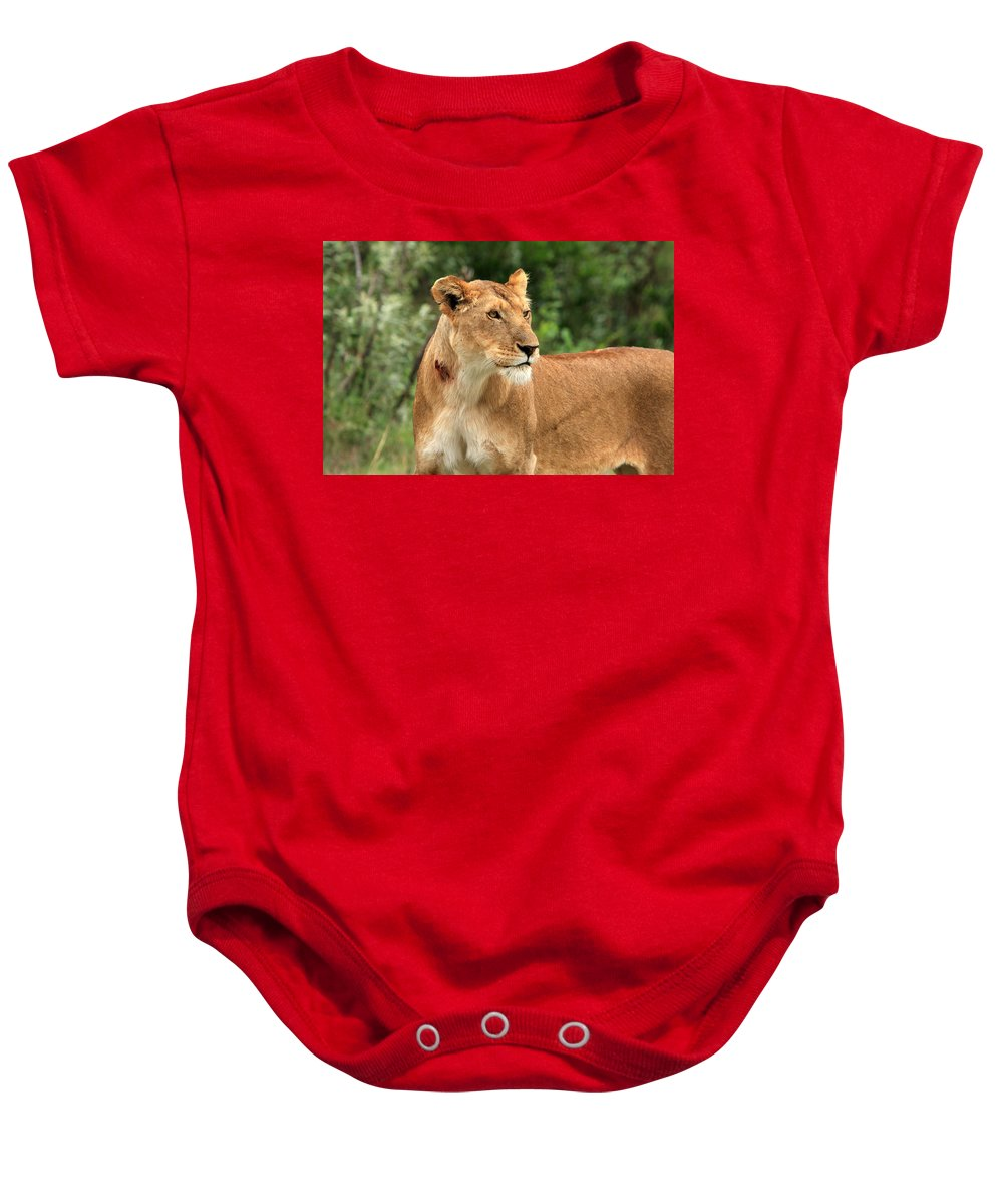 Africa Baby Onesie featuring the photograph Proud Lioness by Aidan Moran