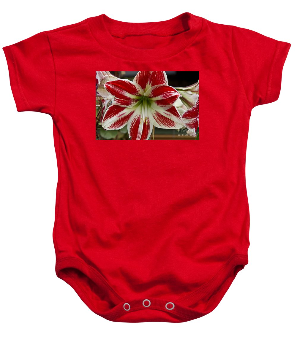 Flowers Baby Onesie featuring the photograph Red And White by Kathy McClure