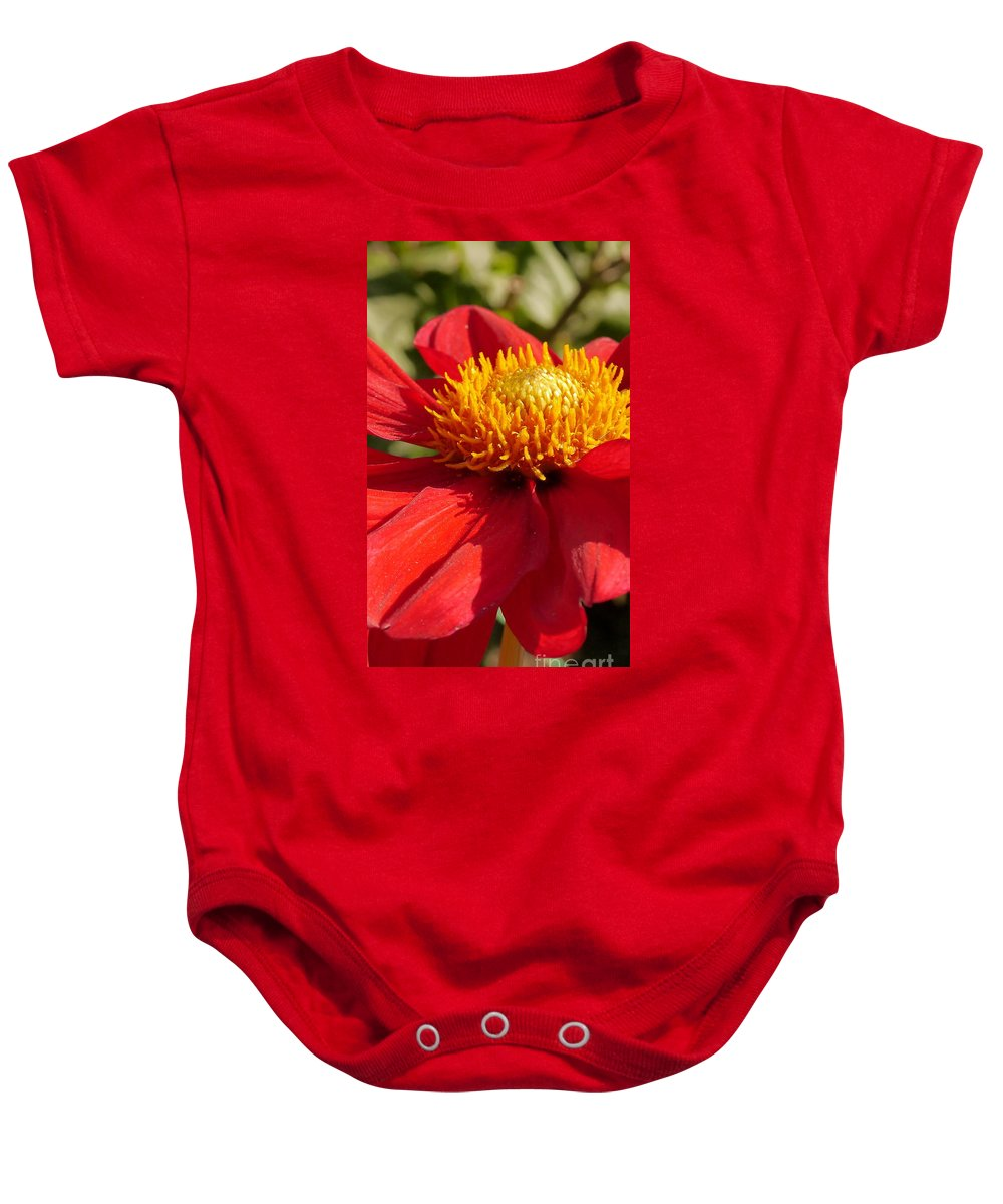 Red Dahlia Baby Onesie featuring the photograph Red Dahlia Coccinea by Christiane Schulze Art And Photography