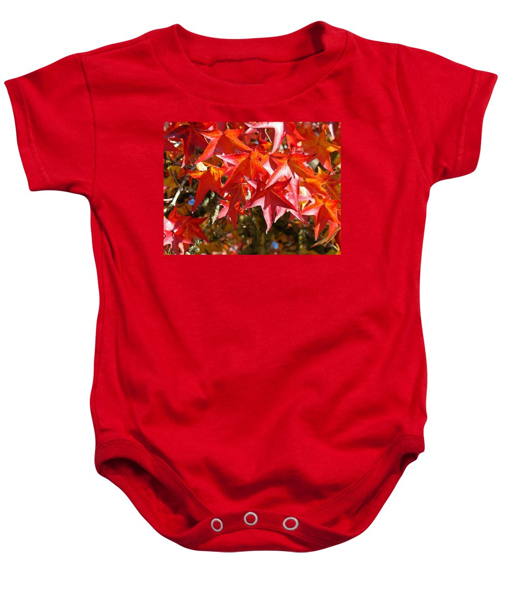 Autumn Baby Onesie featuring the photograph Colorful Fall Tree Red Leaves Art Prints by Baslee Troutman