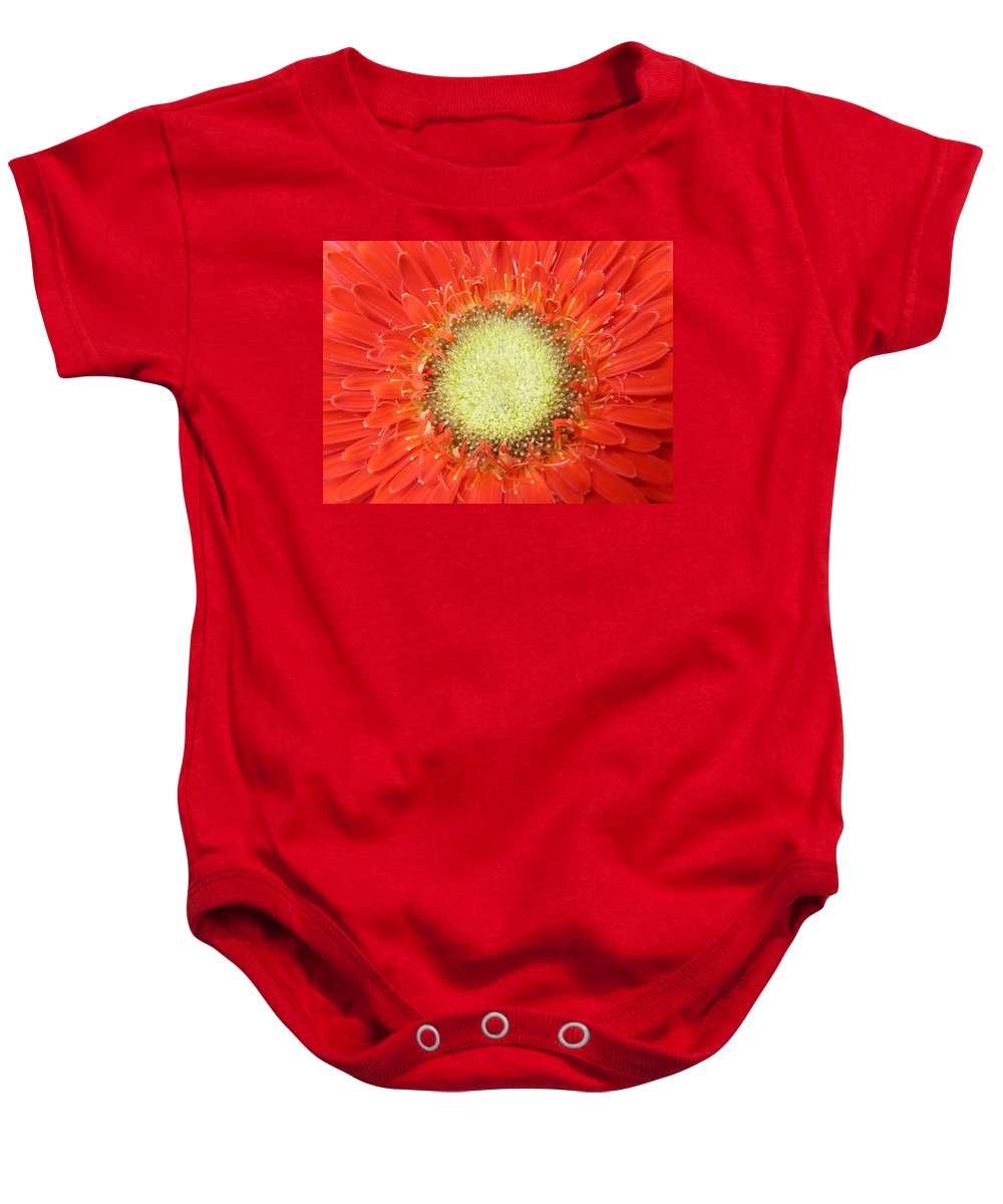 Gerbera Baby Onesie featuring the photograph Gerbera by Daniel Csoka