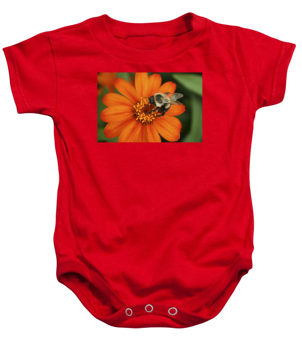 Bee Baby Onesie featuring the photograph Bee On Aster by Margie Wildblood