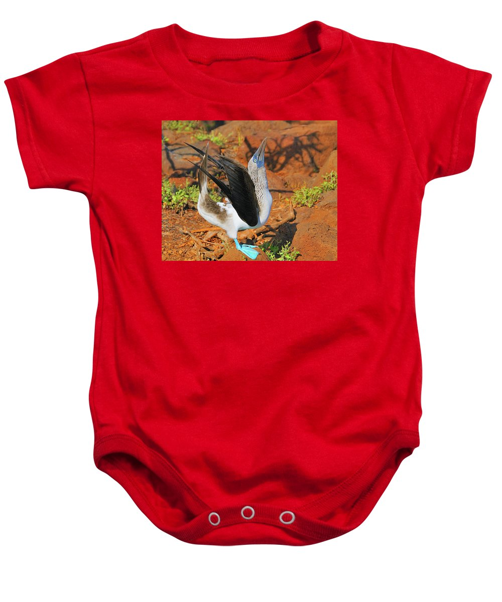 Blue-footed Boobie Baby Onesie featuring the photograph Blue-footed Boobie Display by Tony Beck