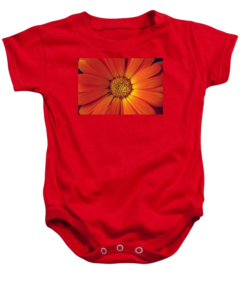 Plant Baby Onesie featuring the photograph Close Up Of An Orange Daisy by Ralph A Ledergerber-Photography