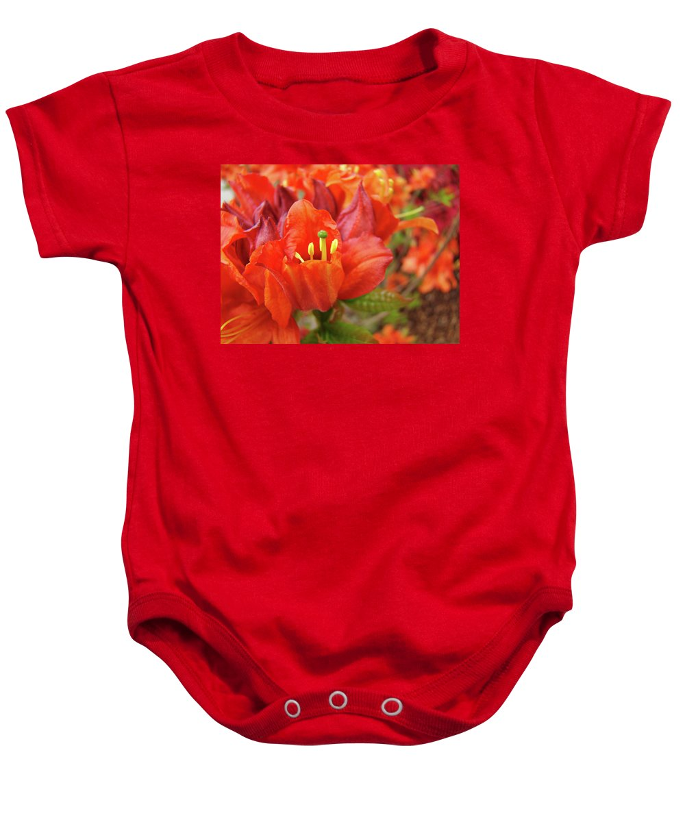 Orange Baby Onesie featuring the photograph Office Art Prints Orange Azalea Flowers 20 Giclee Prints Baslee Troutman by Baslee Troutman