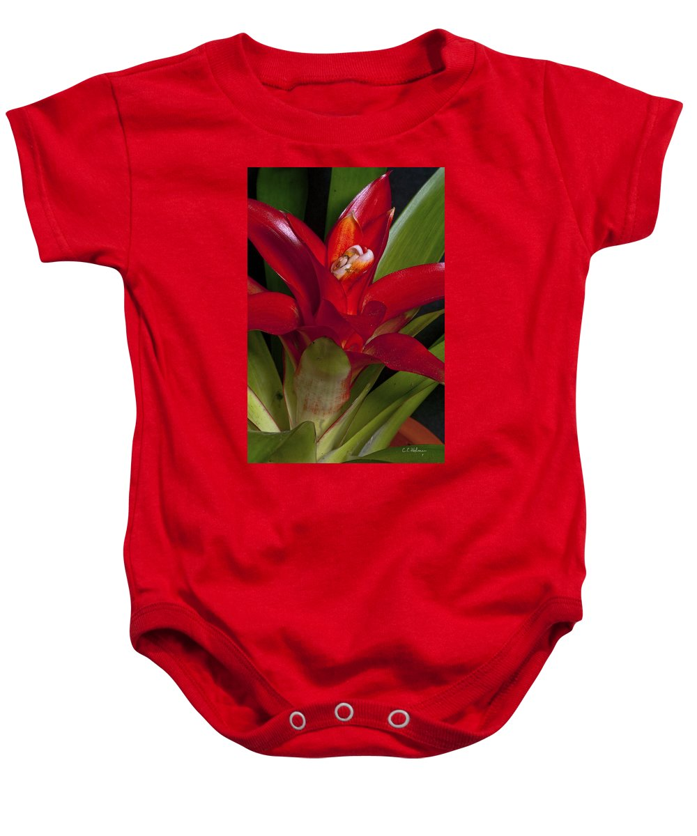 Bromiliad Baby Onesie featuring the photograph Red Bromiliad by Christopher Holmes