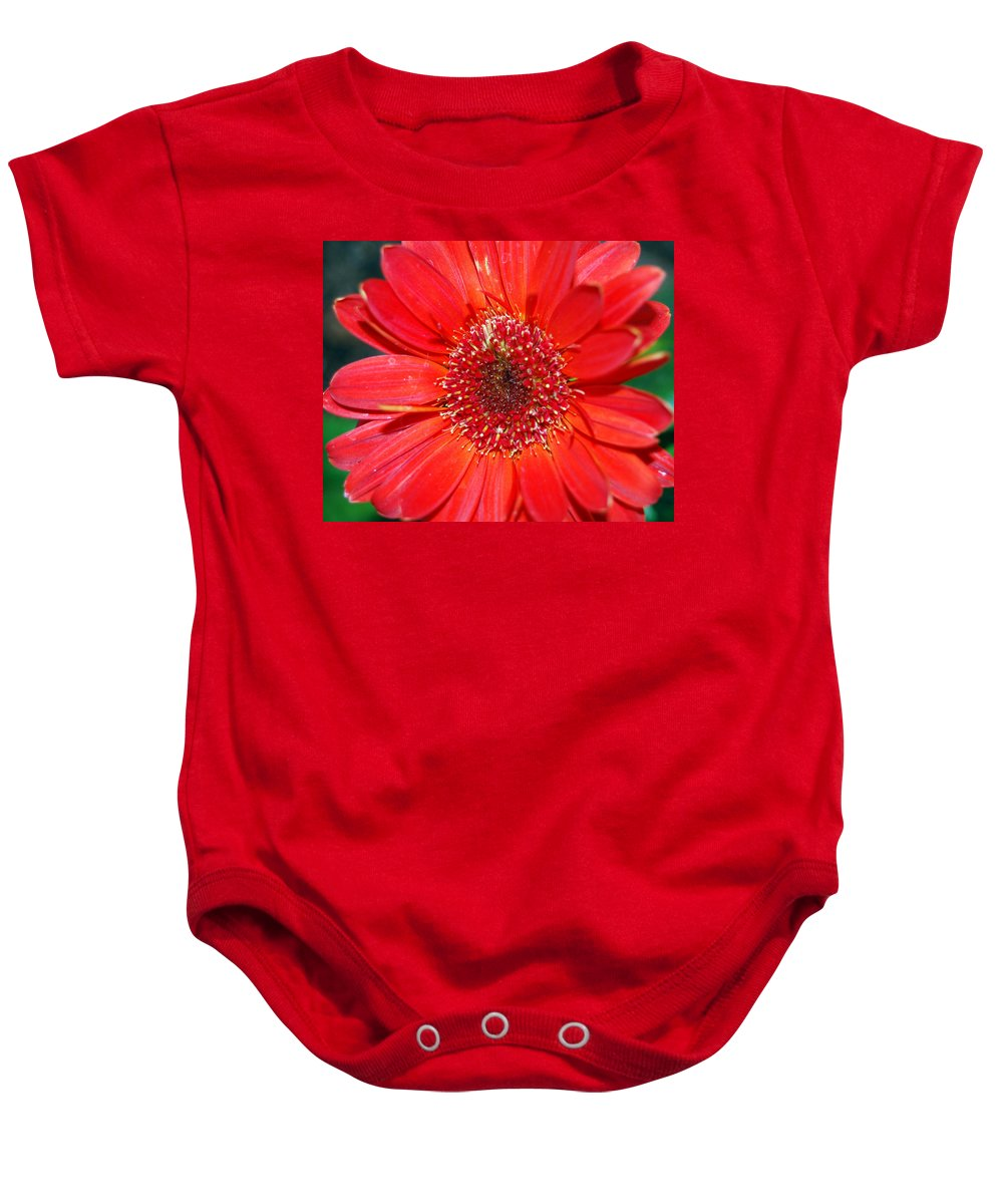 Gerber Baby Onesie featuring the photograph Red Gerber Daisy by Amy Fose