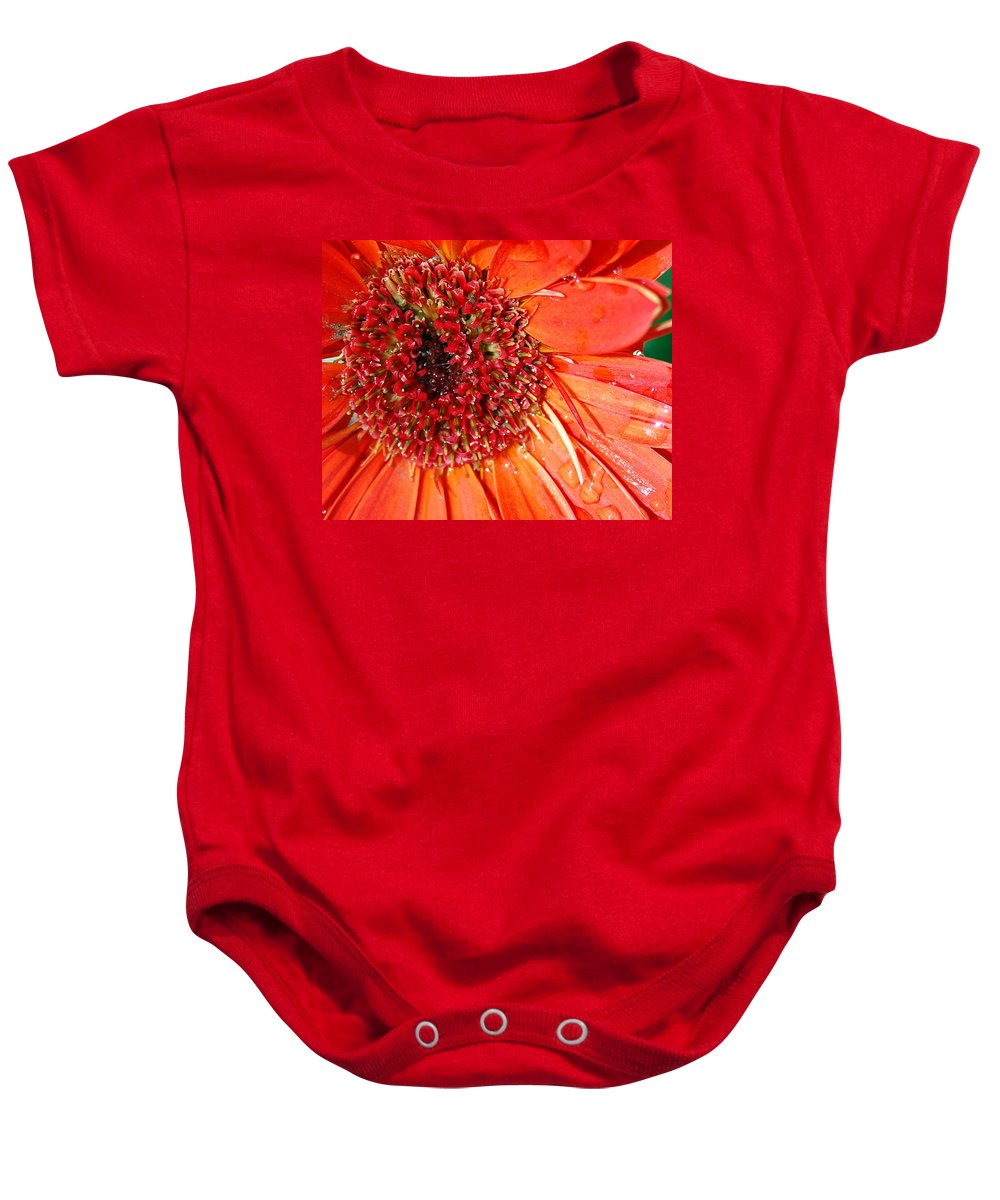 Gerber Daisy Baby Onesie featuring the photograph Red Gerbera Daisy by Amy Fose