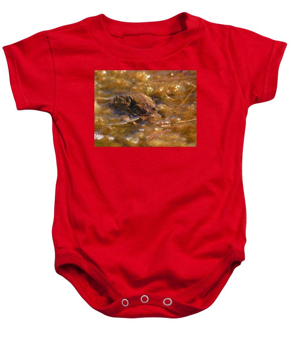 Lehtokukka Baby Onesie featuring the photograph The Common Toads 2 by Jouko Lehto