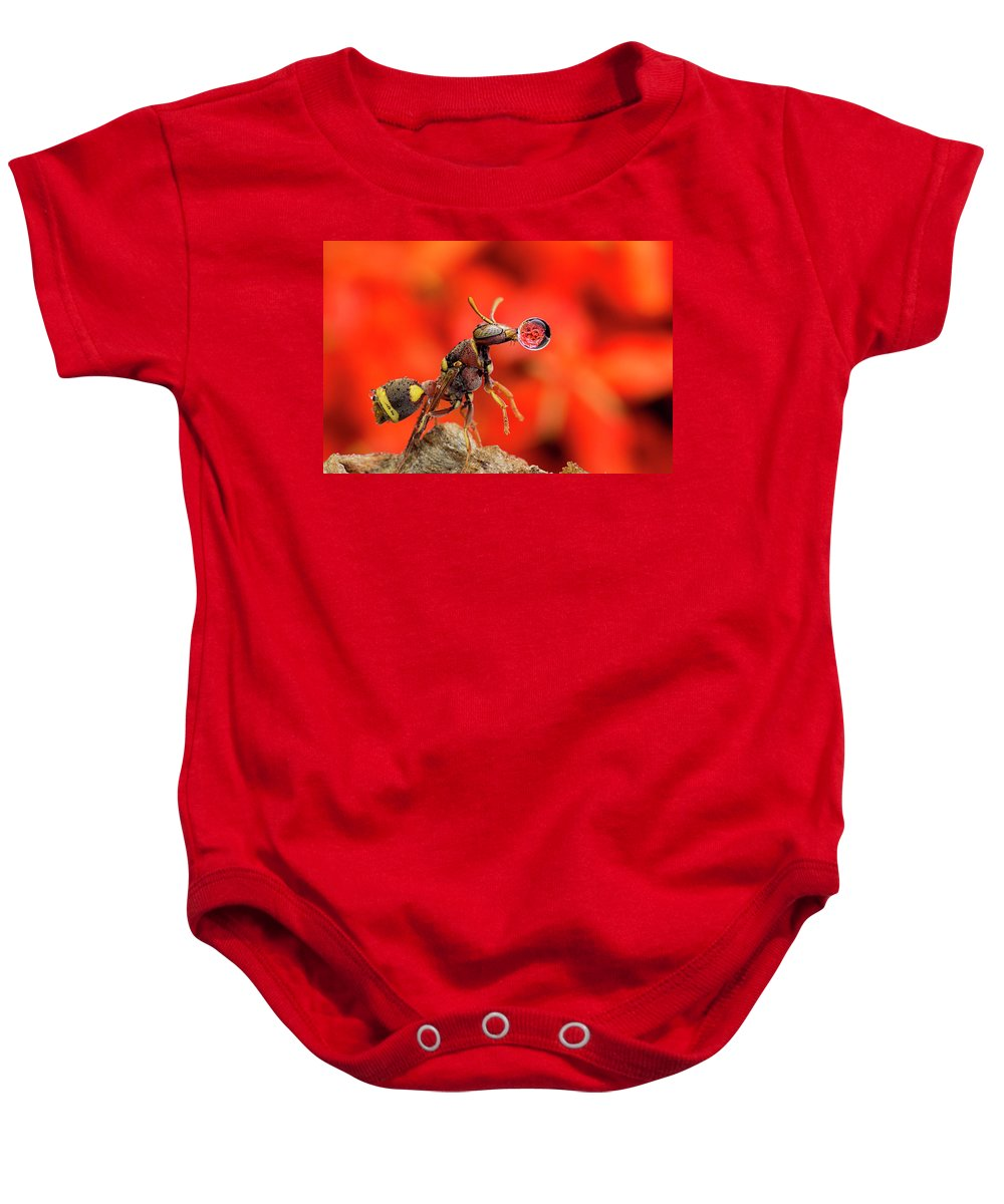 Macro Baby Onesie featuring the photograph Wasp Blowing Bubble 160507c by Lim Choo How
